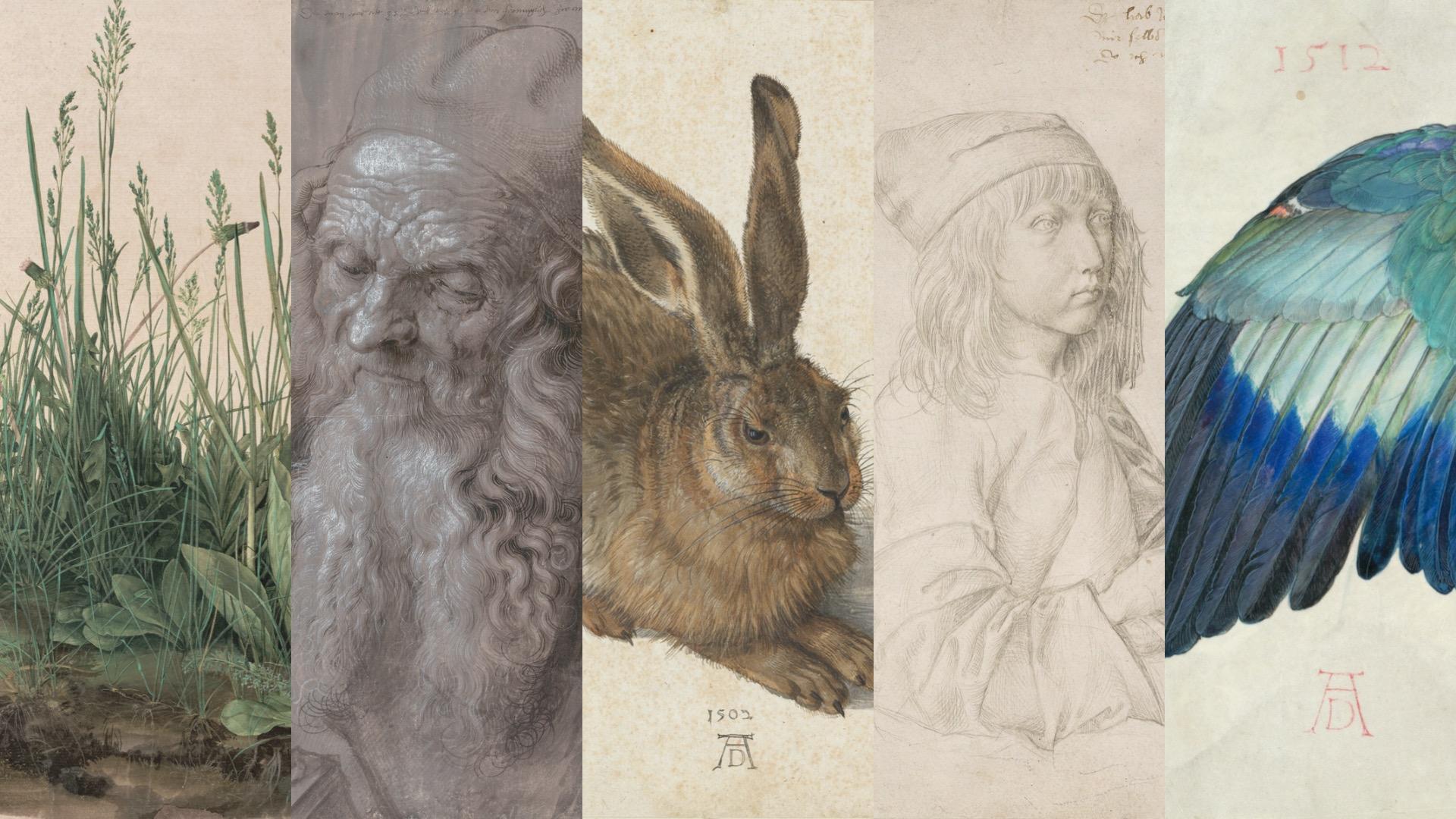 Albrecht Dürer all'Albertina di Vienna